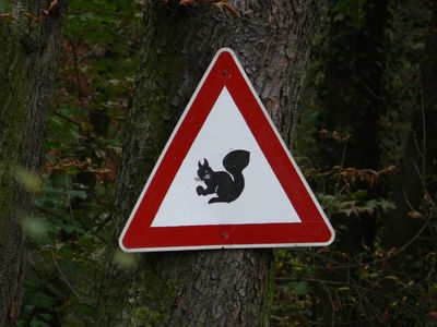 Achtung Eichhörnchen