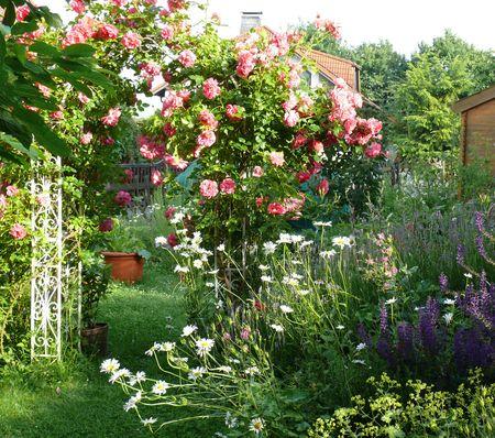Garten - Blütenfülle im Juni