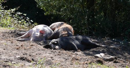 F - Schwein gehabt1_bearbeitet-1