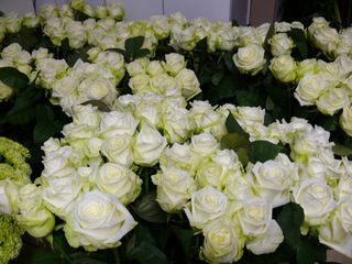 HZT - ein Teil von 700 Rosen1