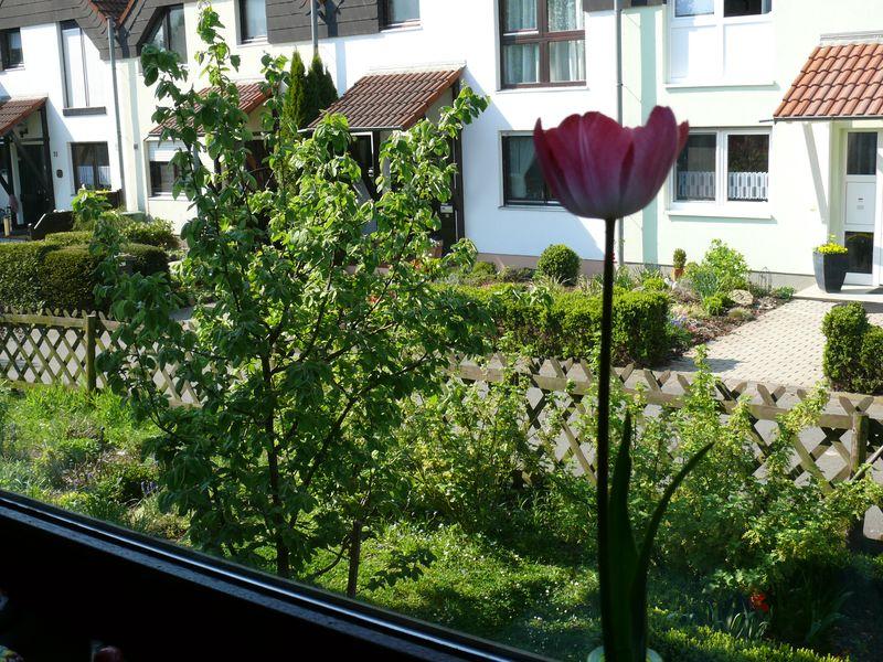 Blick aus dem Kuechenfenster Fruehling 2011_0008