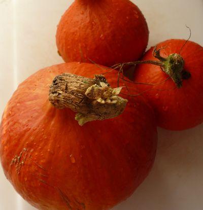 Red Pumpkin und seine Bande