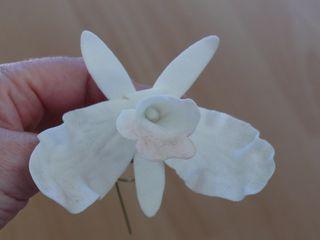 OMG - die Orchideen des Grauens