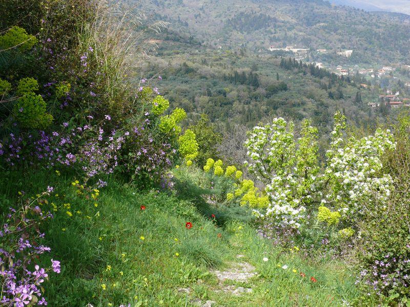 Sonnige Süße Griechenlands