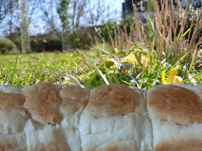 Brot_auf_wiese